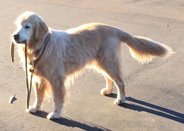 Wij zijn op zoek naar vrijwilligers die vooral s'morgens ons team kunnen bijstaan , uitlaten honden is vooral de taak maar ook andere taken ,te beginnen om 9u, liefst mensen die op voorhand dagen kunnen vastleggen dat ze kunnen komen.
